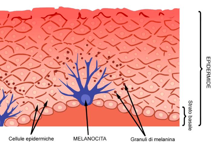 strato superficiale della pelle