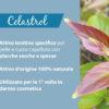 pianta di Celastrol